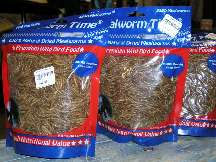 Help out your insect-loving birds with a meal of mealworms!