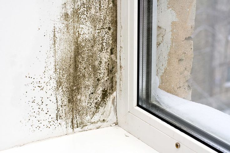 Inspirational White Mold Basement