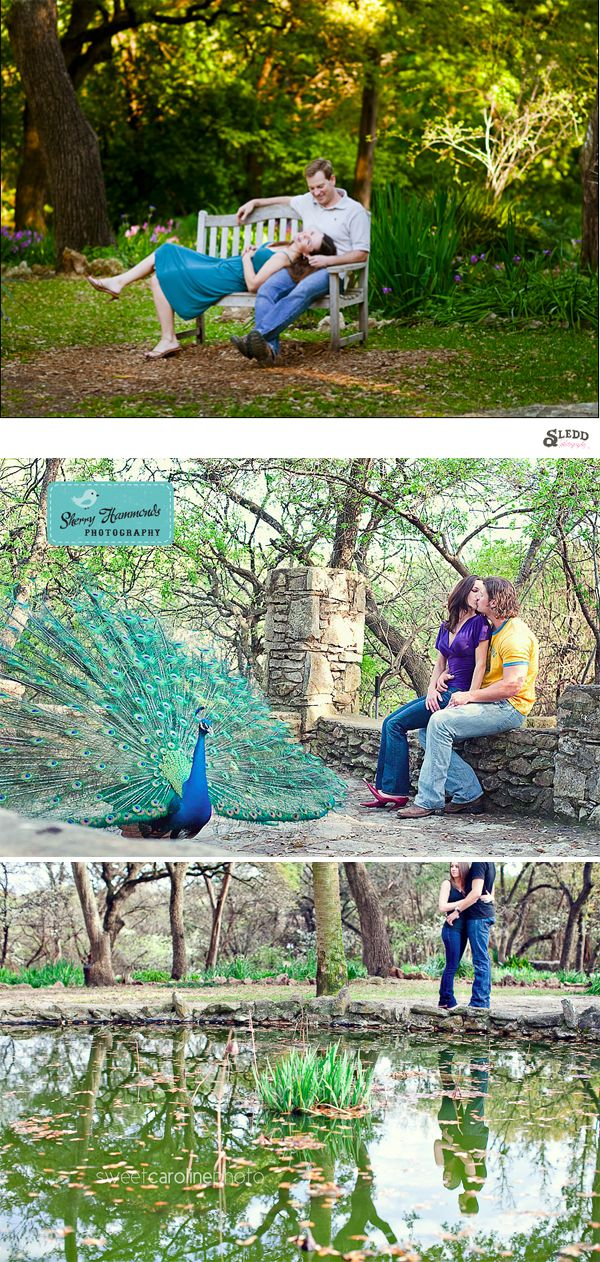 Mayfield Park. There's peacocks!