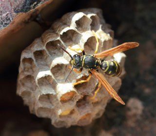 Learn how to kill wasps, or at least destroy their nests, and you could save your summer.