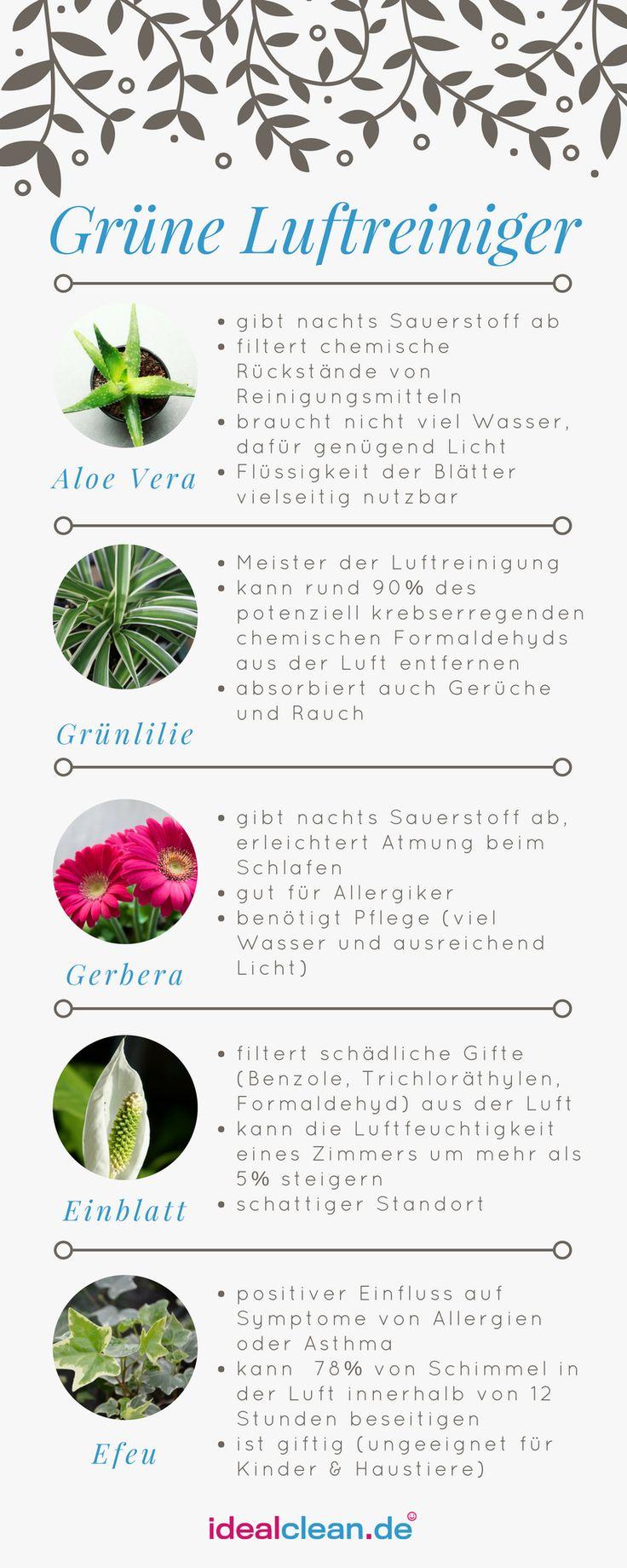 Diese Pflanzen sind super für Dein Zuhause! #gesund #homesweethome #pflanzen #a…