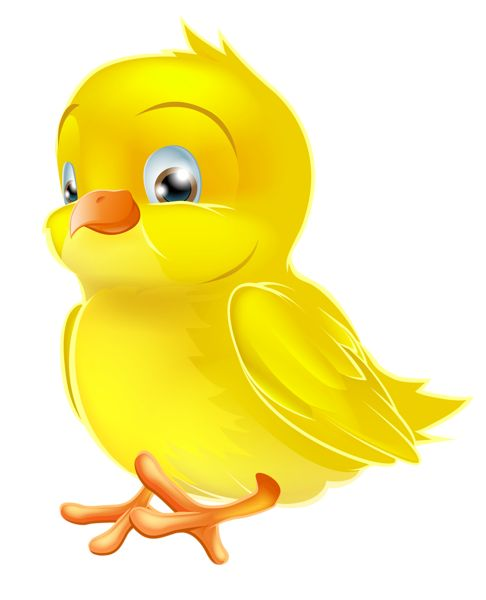 340 best duck &chick images on Pinterest | Animales, Baby ...