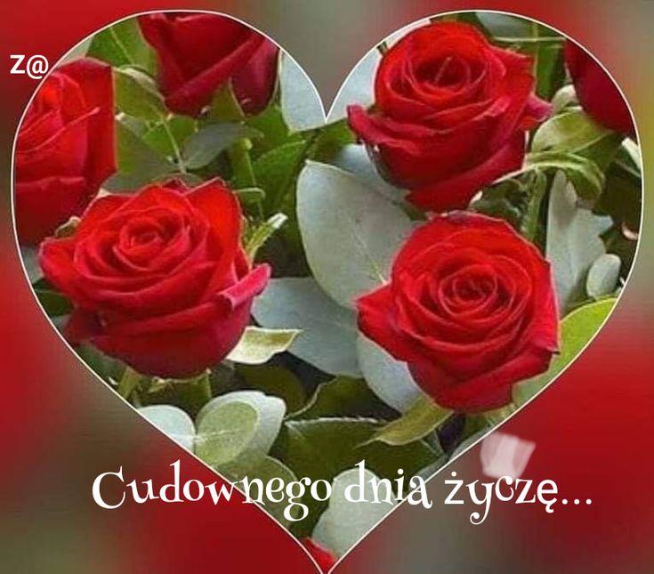 Pin By Zofia Sz On Dzien Dobry Flowers Rose Plants