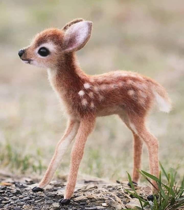 So cute. ~ETS #delicatethings | Animais bebês mais fofos, Animais ...
