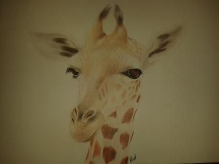 Giraffe pencil drawing by PaulienWassink