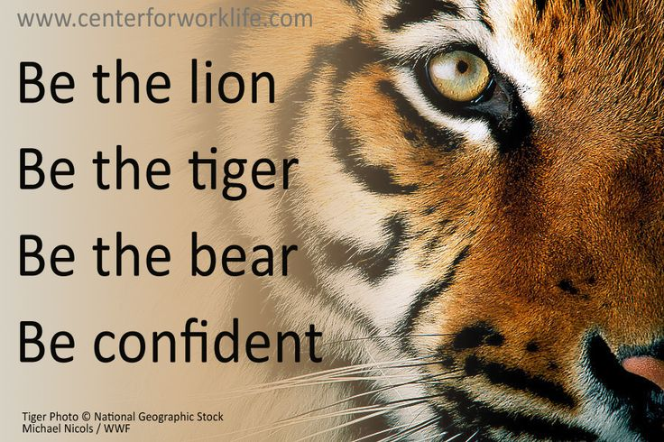 Be the lion, be the tiger, be the bear... be confident #quote #centerforworklife