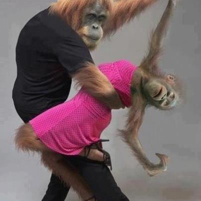 cute animals funny monkeys dancing