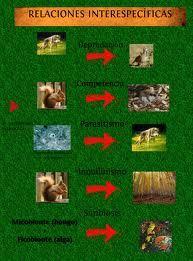 Las relaciones interespecíficas son las que se establecen entre las diferentes especies de un ecosistema.  Las relaciones más habituales son:      Relación depredador-presa            Relación parásito-huésped            Relación de mutualismo            Relación de comensalismo