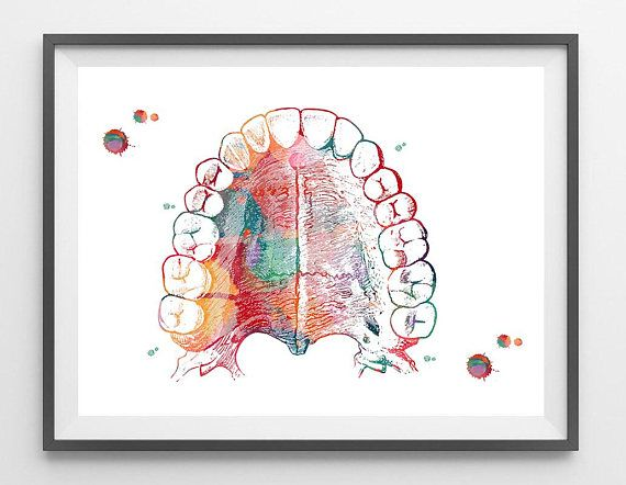 Mouth Anatomy Hard Palate and Teeth Art Print Medical Art