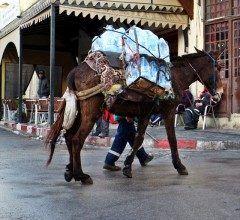 迷宮都市フェズモロッコの旧市街で健気に頑張るお馬さん  世界遺産にして世界一の迷路のフェズ旧市街 車なんかは入れない小路が続くので今でもお馬さんが大活躍ご苦労様っ(ー)  #迷宮都市 #フェズ #モロッコ #馬 #海外旅行 #旧市街 tags[海外]
