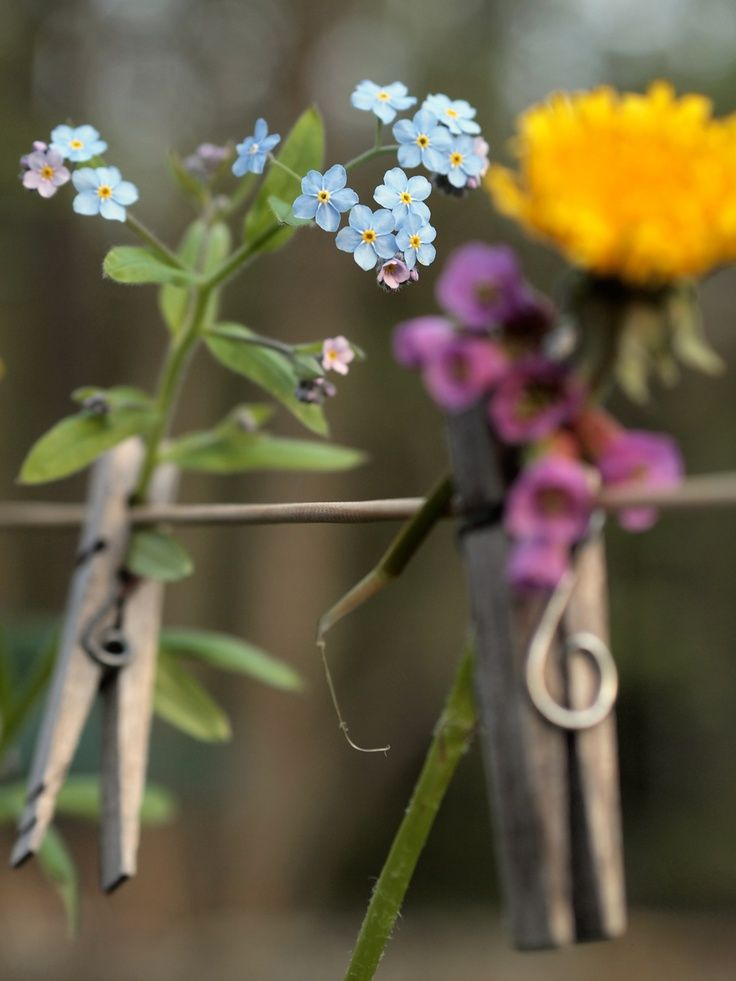 Create hand picked flower bunting by pegging to a line with clothes pegs - cute!