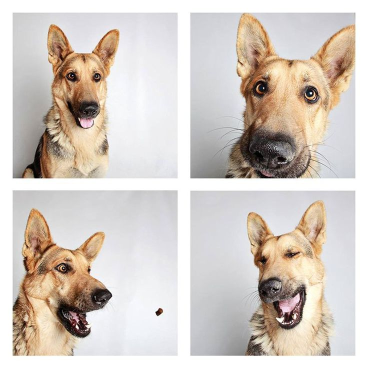 This Photographer Does Photo Booths for Dogs to Increase Adoption and Its Working