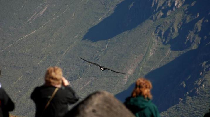 El condor pasa, Colca Canyon