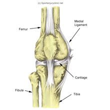 MCL Sprain | Medial Knee Ligament Injury | Sportsinjuryclinic.net