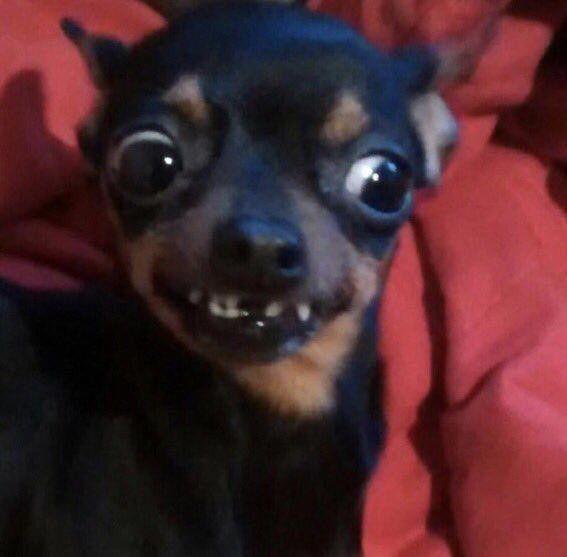 Mas Nuevo Imagen Perros Graciosos Y Feos Pensamientos Las Mascotas Son U Memes De Animales Tiernos Fotos Divertidas De Animales Imagenes De Perros Graciosos