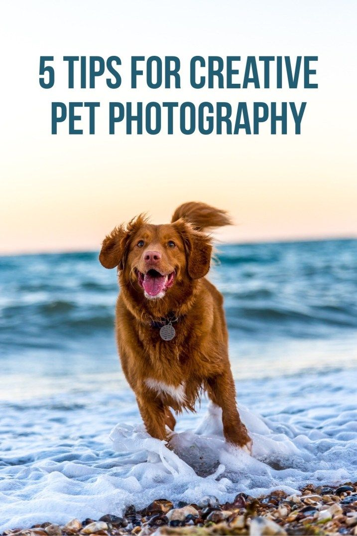 Five Tips For Creative Pet Photography Dog Quotes Love Dog