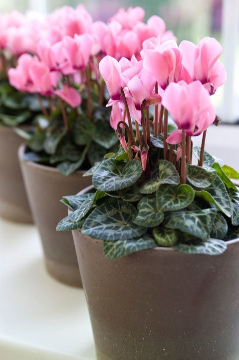 Dobra energia roślin: osiem kwiatów doniczkowych, które emitują jej najwięcej - Dom