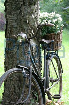 Altes Fahrrad als Gartendeko (Simons)  - lizenzfrei (royalty free)