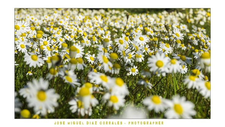 La Primavera by Josemigueldiazcorrales