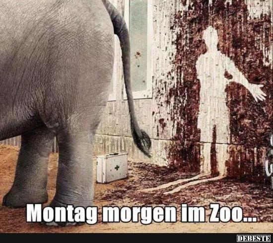 Montag morgen im Zoo.. | Lustige Bilder, Sprüche, Witze, echt lustig