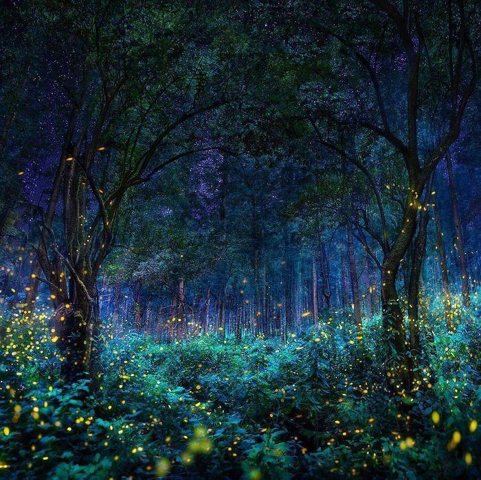 Картинки сказочного леса вечером