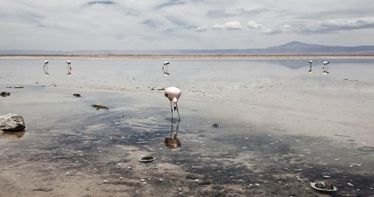 San Pedro de Atacama: About What, Orán, Two Hundred, Pedro De, Atacama