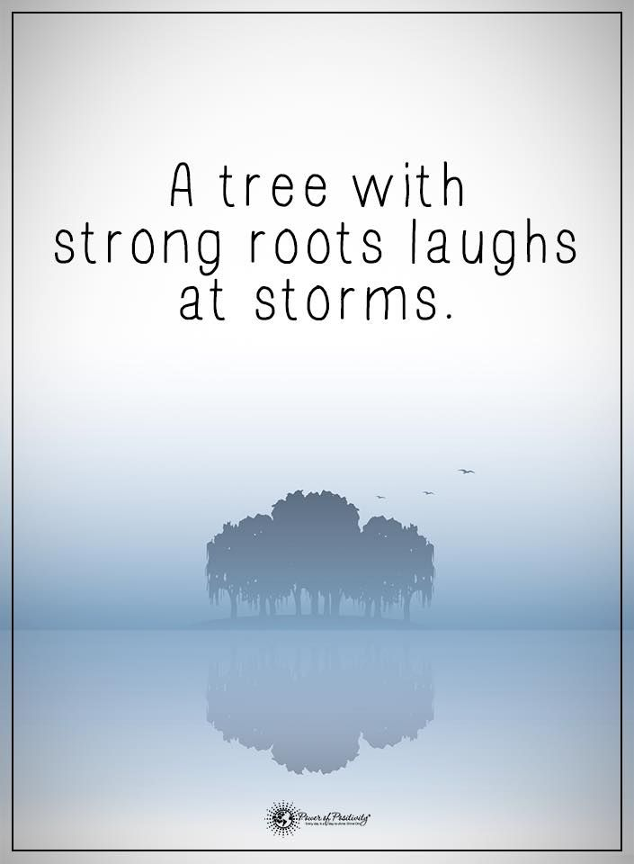 A tree with strong roots laughs at storms.  #powerofpositivity #positivewords  #positivethinking #inspirationalquote #motivationalquotes #quotes