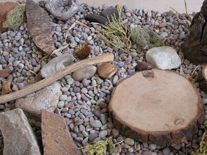 """Items from nature such as plants, rocks, shells, flowers, and animals are considered essential for creating aesthetic experiences. Natural items such as pebbles, seeds, and driftwood add a richness of texture and color to the sensory experience."""