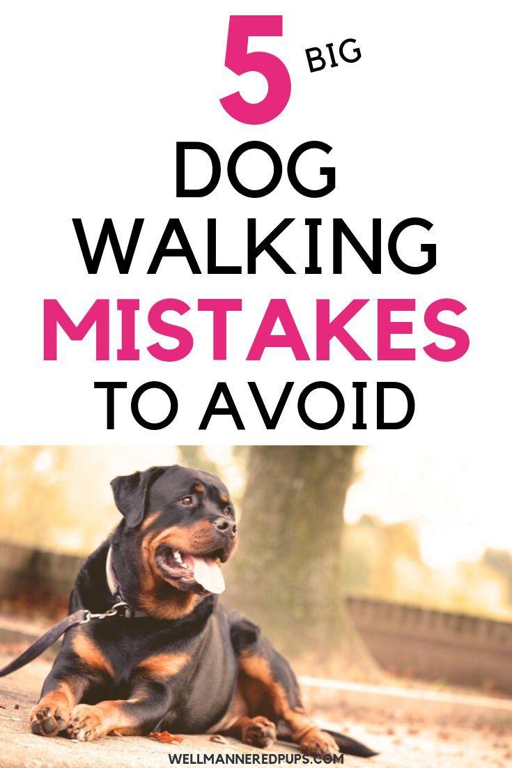 5 Mistakes You Are Making On Dog Walks Dog Walking Dog Training