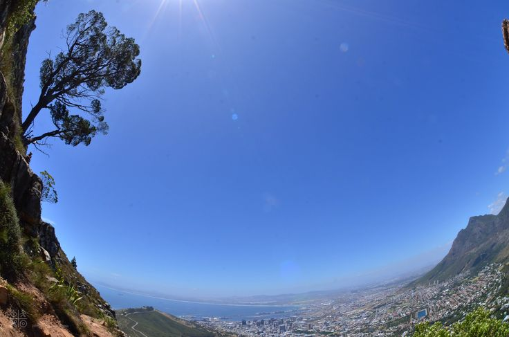 When Nature spreads out in unexpected places: near the top of Lion's head...Nikon D7000, zoom 200mm, opening 2,8