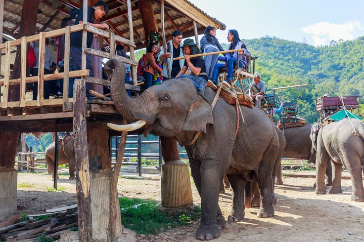 Enjoy your travels to the fullest but don't engage in elephant rides, dolphin swims or the purchase of souvenirs that include ivory.