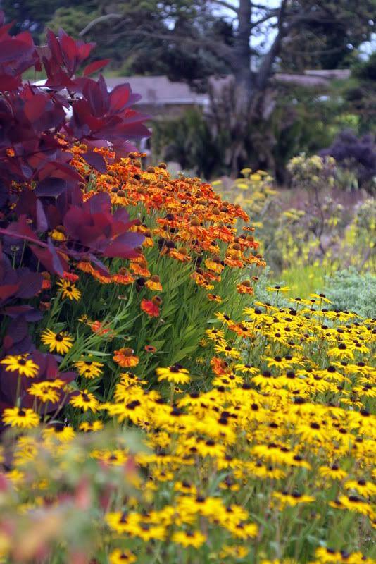 [Árbol de humo y flores] > [* - Árbol de humo: un arbusto o pequeño árbol de la familia del anacardo que produce penachos largos y plumosos de flores, dándole una apariencia ahumada.] » Smoketree and flowers