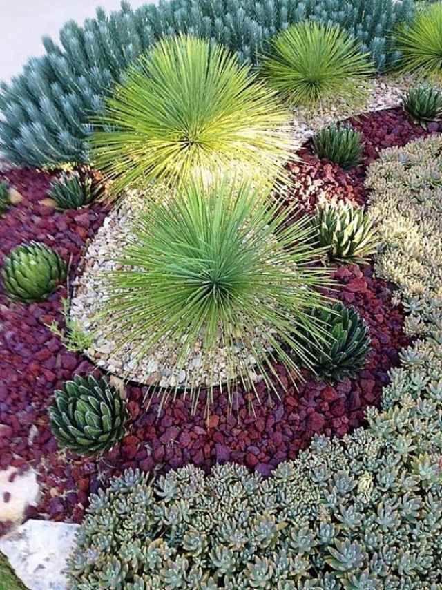 aménagement paysager avec des plantes de jardin très originale
