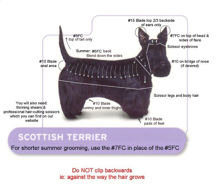 Professional Dog Andis Clippers - Kit For Scotties, Andis Professional Clipper Kit, Scottie ( Xtra# 5fc, #7fc, #3-3 / 4fc Blades Dvd )