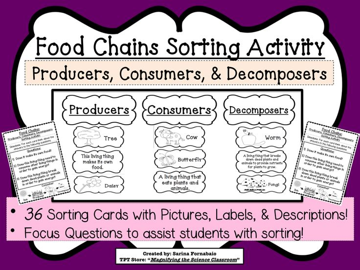 food chains sorting activity. allows students to sort, and place the terms and different animals into their correct category.