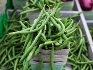 Beans are easy to plant and quick to grow.
