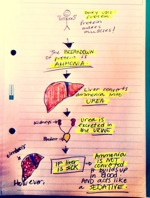 My awesome notes - the breakdown of ammonia in the body.
