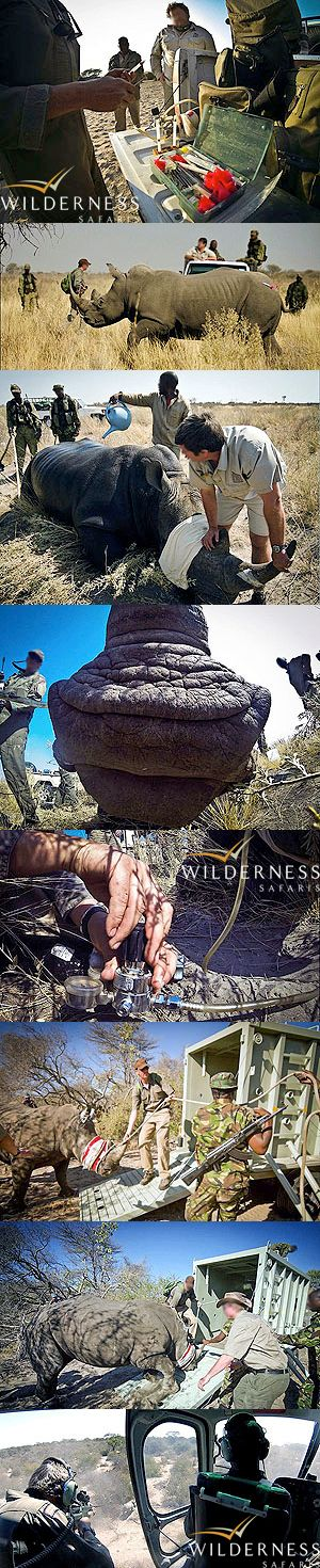 We Are Wilderness -  Wilderness Safaris' rhino conservation project in Botswana.  Click on the image to view the full gallery.