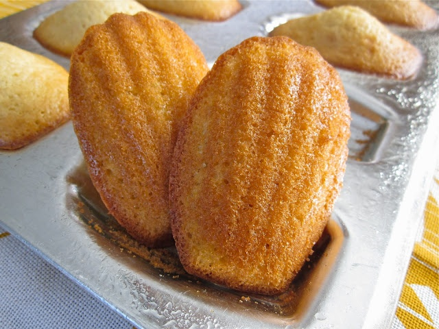 Madeleines.: Food Recipes, Garden Studio, Scented Madeleines, Ginger Madeleines, Almond Scented, Madeleine Recipes
