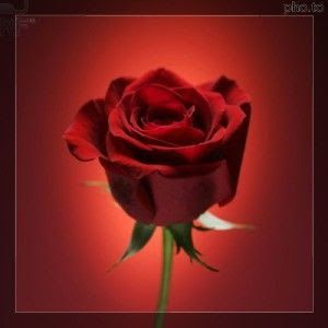lucia montis soprano: Rosa Rossa