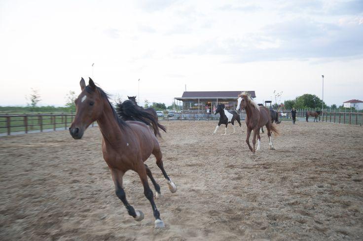 Filoneikos ,Karditsa,Greece #horses