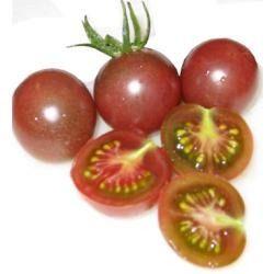 Ecotrecos: Plantação de Tomates-Cereja em apartamento