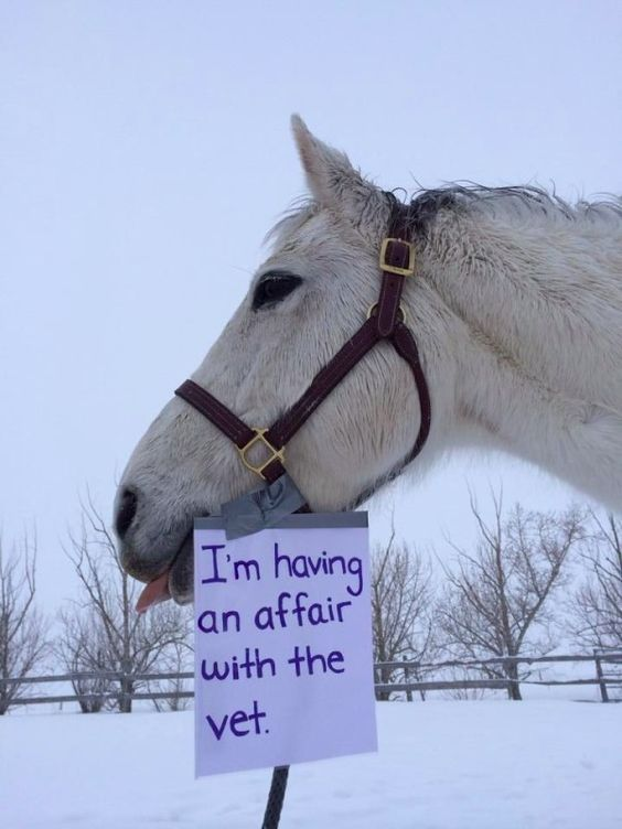 12 Hilarious Horse Shaming Photos That Will Put a Smile on Your Face