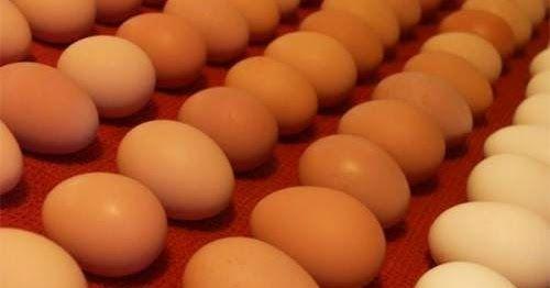 Τσέκαρε με ένα απλό τεστ εάν τα αυγά σου είναι φρέσκα!