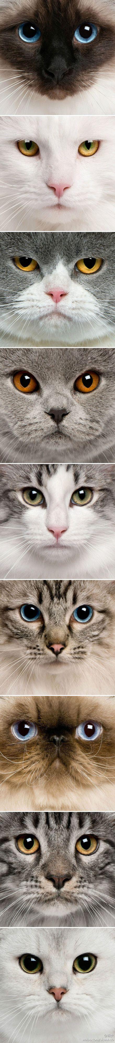 Can Cat Flu Kill Kittens