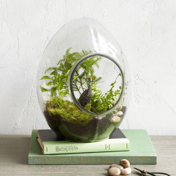 Home accessory: hipster, plants, terrarium, book, nature, pastel green - Wheretoget