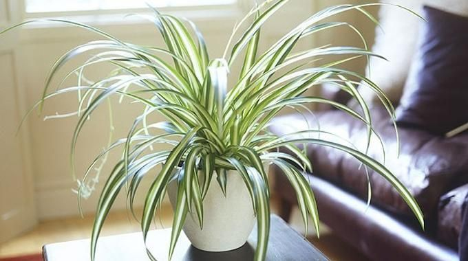 Les 25 meilleures id es de la cat gorie plantes for Plante interieur photo