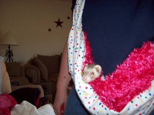 Ferret carry sling: Pet