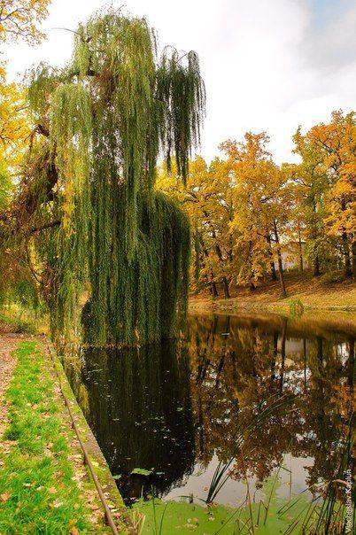 Park Nyvky #kiev #ukraine
