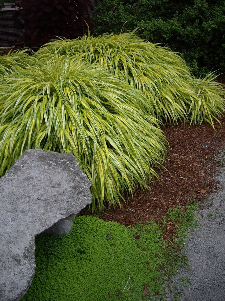 55 best images about shade deer resistant plants on for Can ornamental grasses grow in shade